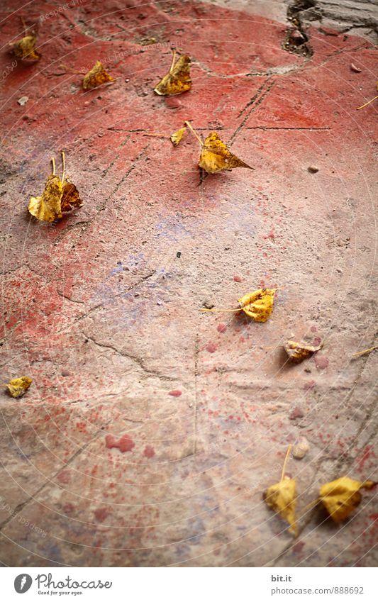 lemon tree leaves Autumn Town Autumnal Autumn leaves Autumnal colours Early fall Autumn wind Stone floor Colour photo Exterior shot Deserted Copy Space bottom