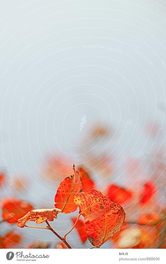 Nature Plant Autumn Beautiful weather Transience Autumn leaves Autumnal Autumnal colours
