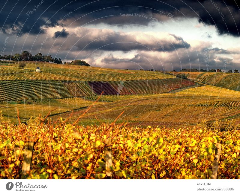 Next... thunderstorms Vine Clouds Vineyard Autumn Dark Yellow Sunset Threat Leaf Slope Gold Evening Rheingau Evil Back draft Elevator Grass Sky rugged