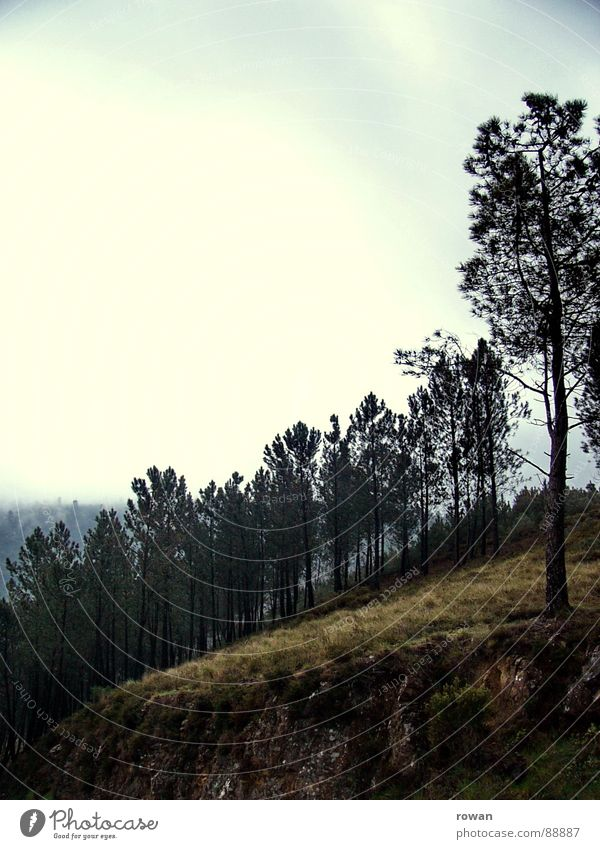Nature Tree Calm Clouds Forest Dark Cold Mountain Hiking Branch Treetop Doomed Twig Branchage Pine Clearing