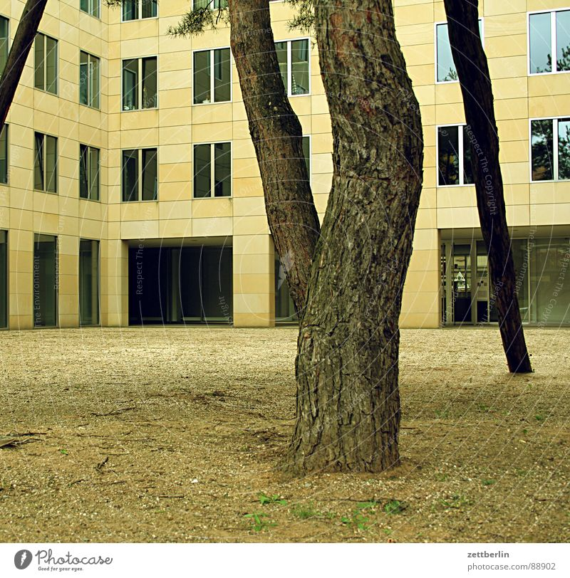 House (Residential Structure) Life Cold Berlin Window Room Facade Modern Empty Living or residing Pine Interior courtyard New building Potsdamer Platz Lower jaw