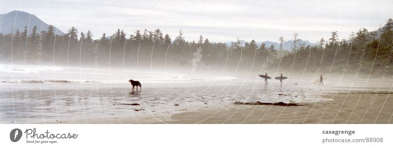 Tofino jumping surfing Beach Dog Surfer Canada Ocean Long Beach Vancouver Island Forest Panorama (View) Steam Fog Sand Large Panorama (Format)