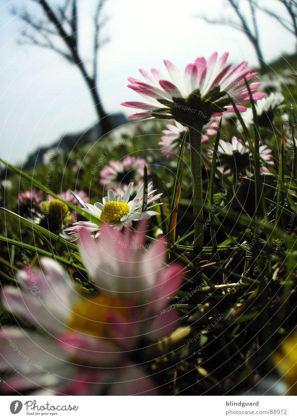 Nature Sky White Tree Flower Green Meadow Grass Spring Garden Pink Near Wild animal Deep Airplane landing Daisy