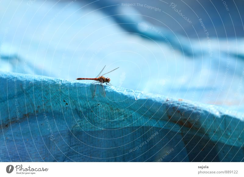 red dragonfly Nature Animal Wild animal Insect Dragonfly 1 Sit Wait Esthetic Blue Red Contrast Colour photo Exterior shot Macro (Extreme close-up) Deserted