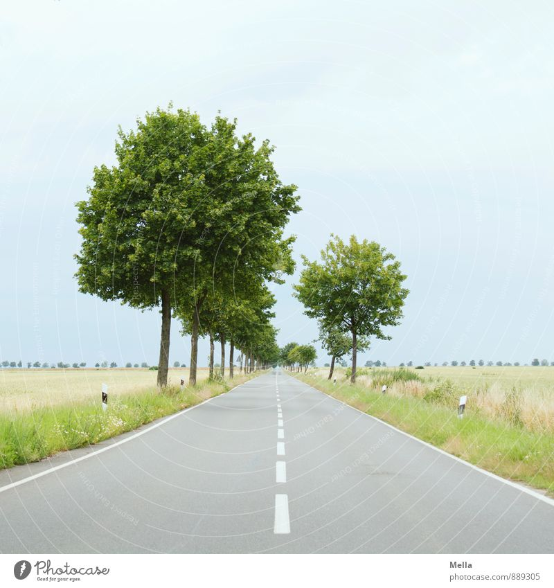 To the horizon, then left Environment Landscape Tree Traffic infrastructure Street Country road Traffic lane Lane markings Median strip Curb Avenue Asphalt Line