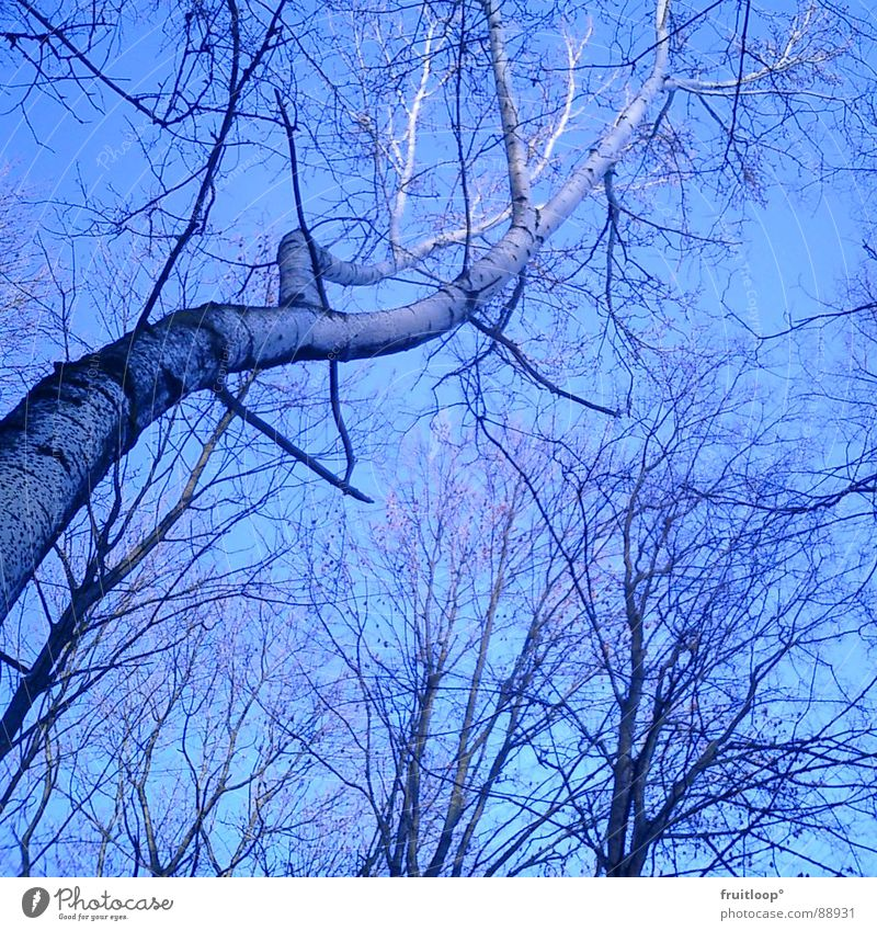 Sky Tree Blue Branch Easy Flexible Airy Ambitious