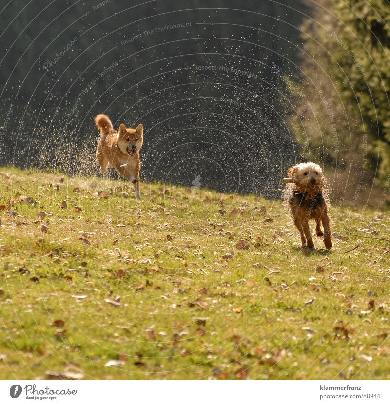 Dog Joy Animal Meadow Movement Playing Laughter Walking Energy industry Speed Wet Drops of water Fantastic Driving Running Hunting