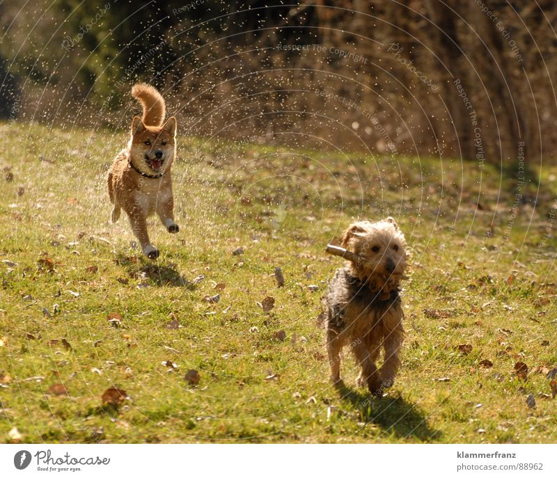 Dog Joy Animal Meadow Movement Playing Laughter Walking Energy industry Speed Wet Drops of water Fantastic Driving Running Near