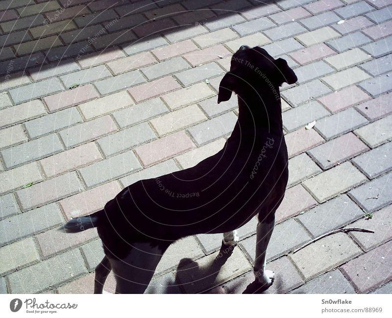 Beautiful Black Animal Dog Elegant Mammal Ergonomics