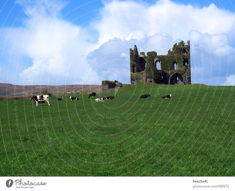 castle ruin Ruin Grass Green Meadow Cow Exterior shot Clouds Kerry Derelict Castle Landscape Ireland Ballycarberry Castle
