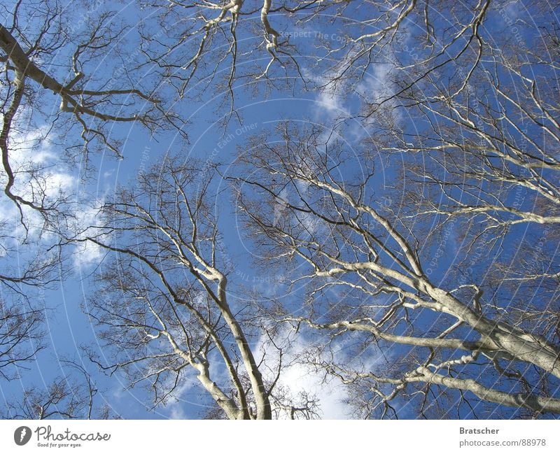 Sky Tree Vacation & Travel Clouds Relaxation Autumn Dream Branch Transience Longing Spain Retirement Twig Divide Doubt Cumulus