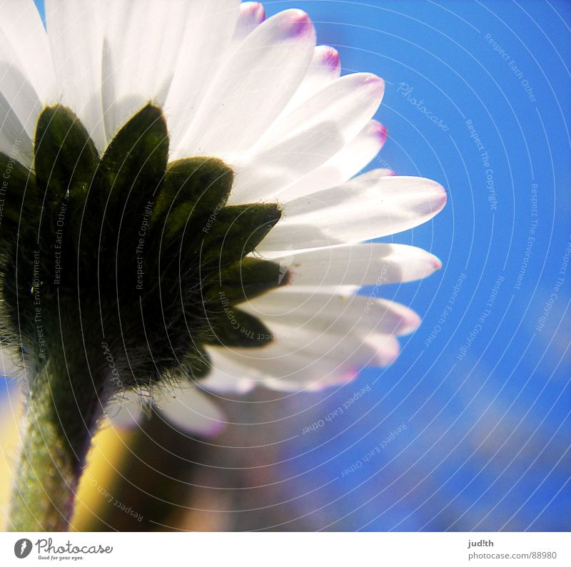 Nature Sky White Flower Green Blue Meadow Blossom Grass Spring Garden Daisy Flower meadow