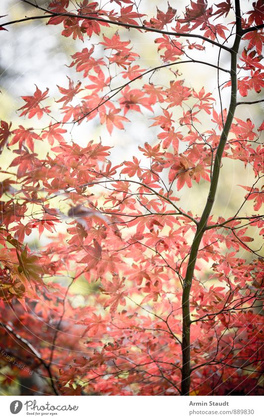 Nature Plant Beautiful Tree Red Leaf Forest Life Autumn Natural Background picture Moody Dream Air Park Authentic