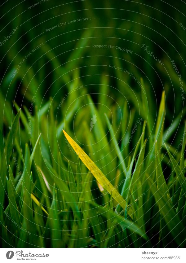 There's a guy hiding.... Green Grass Yellow Meadow Greeny-yellow Field Blur Insulation Hide Contrast forest deck Americas Floor covering