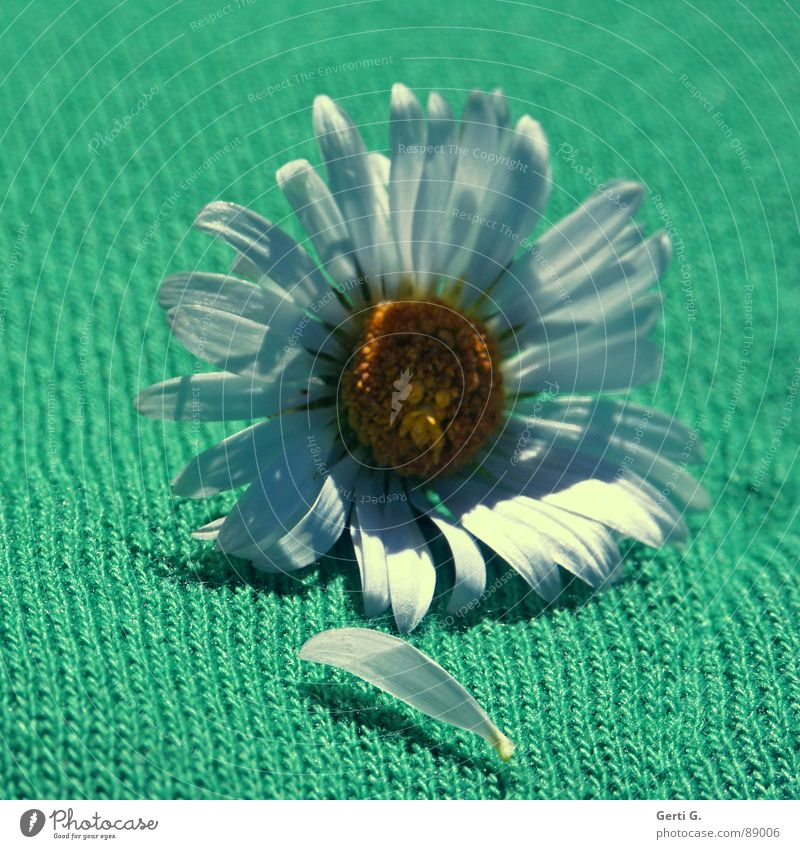 White Flower Green Joy Yellow Blossom Line Clothing T-shirt Exceptional Cloth Diagonal Daisy Material Pull Marguerite