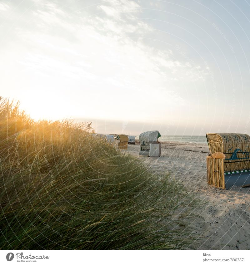 late summer's day Relaxation Calm Vacation & Travel Tourism Trip Freedom Summer Summer vacation Sun Beach Ocean Sand Sky Beautiful weather Grass Wild plant