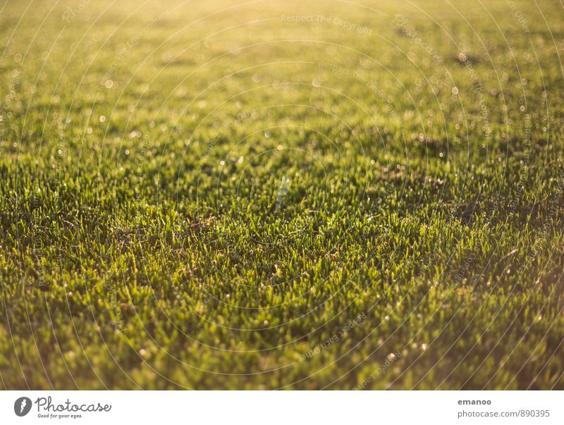 rain lawn Nature Landscape Plant Water Sunlight Spring Summer Climate Weather Beautiful weather Rain Grass Garden Park Meadow Soft Gold Green Mow the lawn Damp