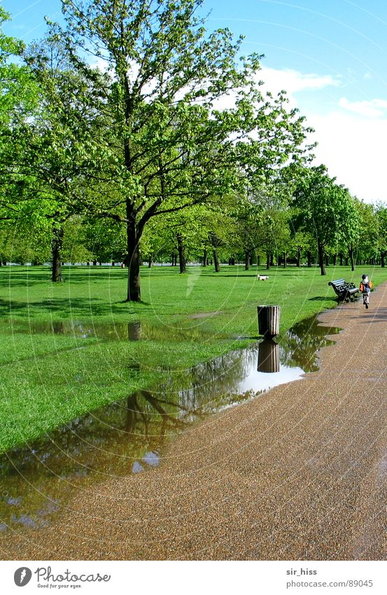 parking lane @ Hyde Park Green Puddle Child Park bench Tree Meadow Hydepark England To go for a walk Breathe Air Vacation & Travel Spring Garden Water