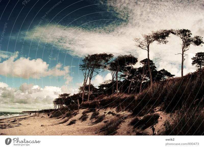 Human being Sky Nature Plant Tree Landscape Clouds Beach Far-off places Environment Grass Group Horizon Weather Idyll Waves