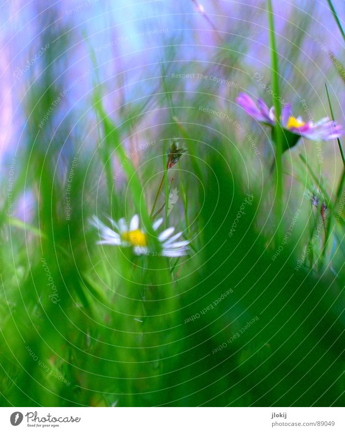 Nature Sky White Flower Green Blue Plant Summer Joy Lamp Meadow Blossom Grass Movement Spring Background picture