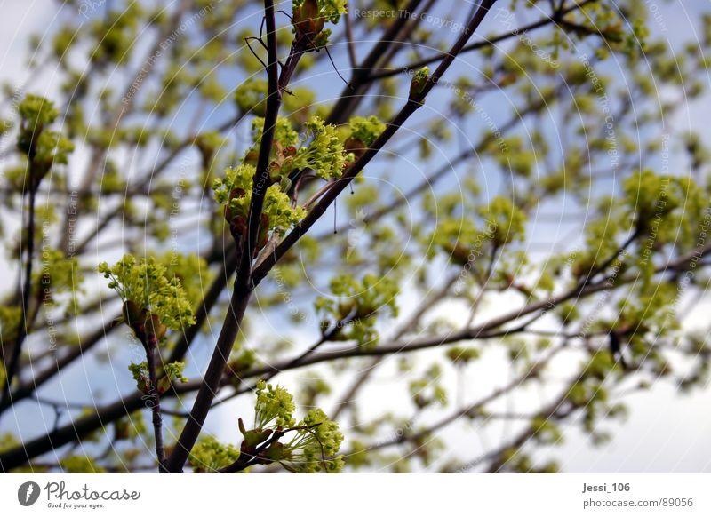 Nature Sky Tree Green Calm Blossom Spring Air Branch Blossoming