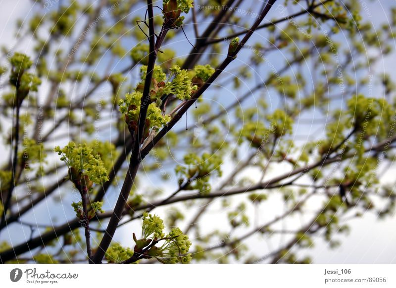 spring mood Spring Green Tree Calm Blossom Air Blossoming Sky Branch Nature
