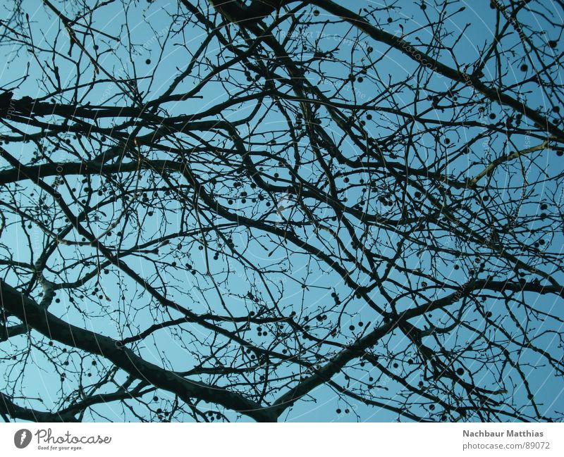 point by point Tree Muddled Chaos Summer Spring Branch Sky Blue ramified Nature