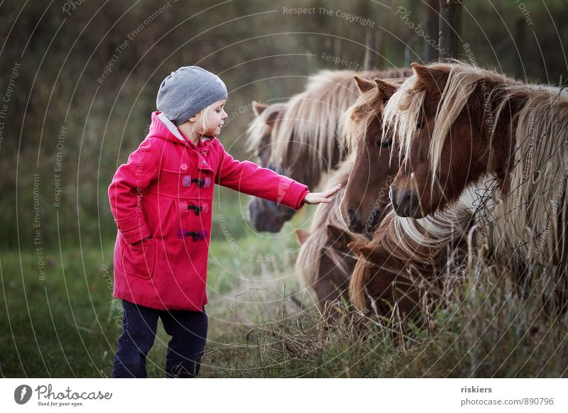 Human being Child Relaxation Red Girl Animal Autumn Natural Friendship Dream Contentment Infancy Smiling Observe Group of animals Cute