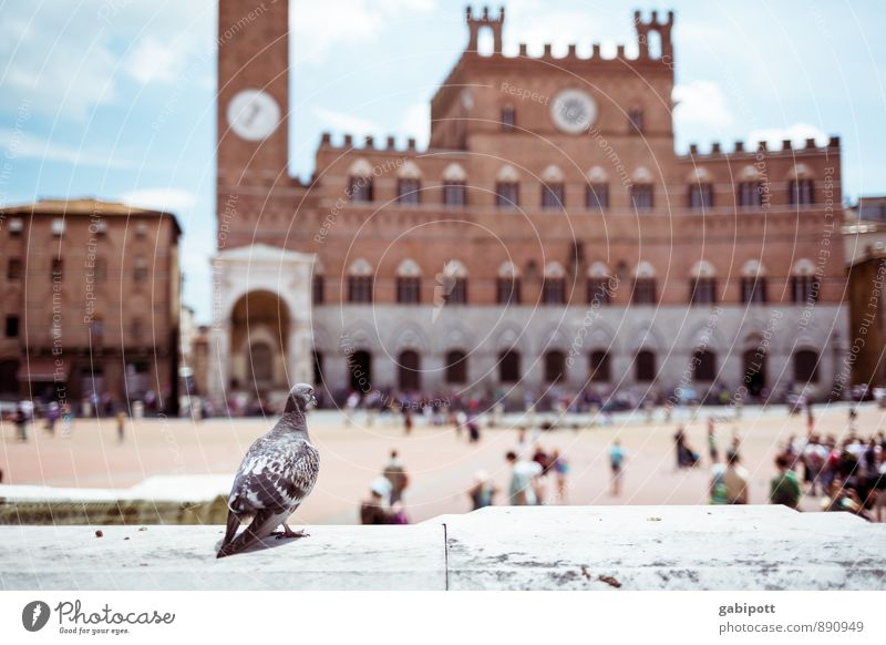 BirdPerspective Vacation & Travel Tourism Trip Adventure Sightseeing City trip Siena Town Palace Places Marketplace Tower Manmade structures Building