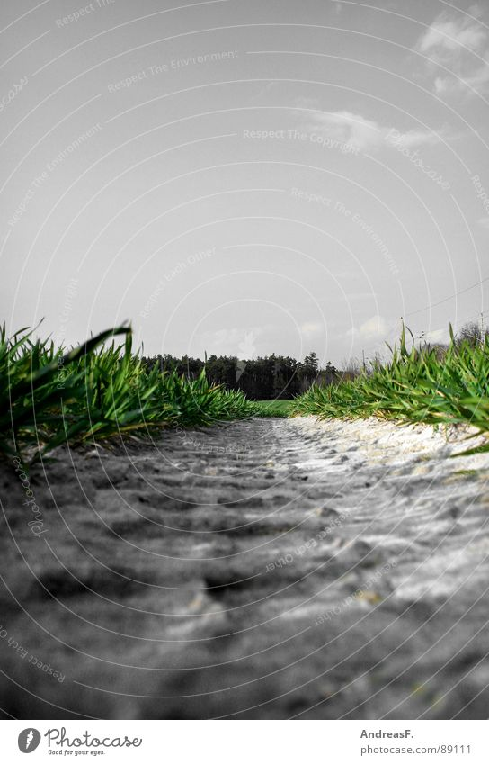 Green Plant Meadow Grass Field Dirty Earth Fresh Floor covering Lie Tracks Grain Agriculture Worm's-eye view Blue sky