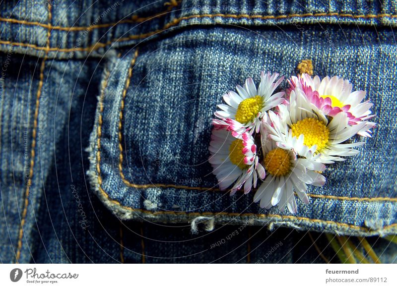 bouquet Daisy Jeans jacket Flower Spring Summer Summery Jacket Buttonhole Jewellery Buttons Embellish Blossom Jump Beautiful weather sun button hole decoration