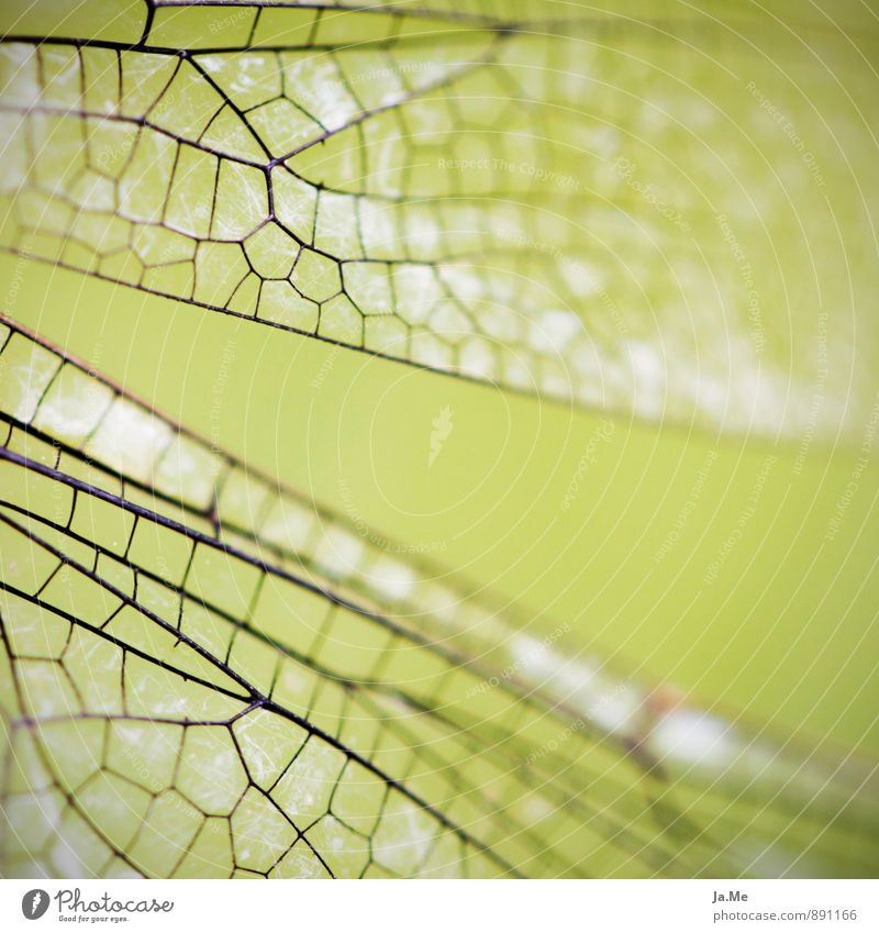 Libellenskelett Animal Air Garden Wild animal Wing Dragonfly Insect 1 Green Colour photo Exterior shot Detail Macro (Extreme close-up) Pattern