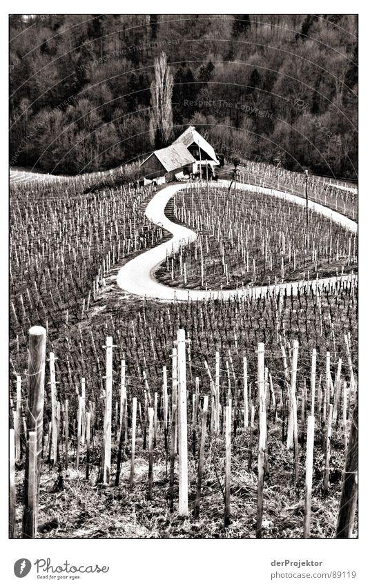 Street of Love Slovenia Vineyard Wine growing Winter January Nostalgia Black & white photo Heart Pain