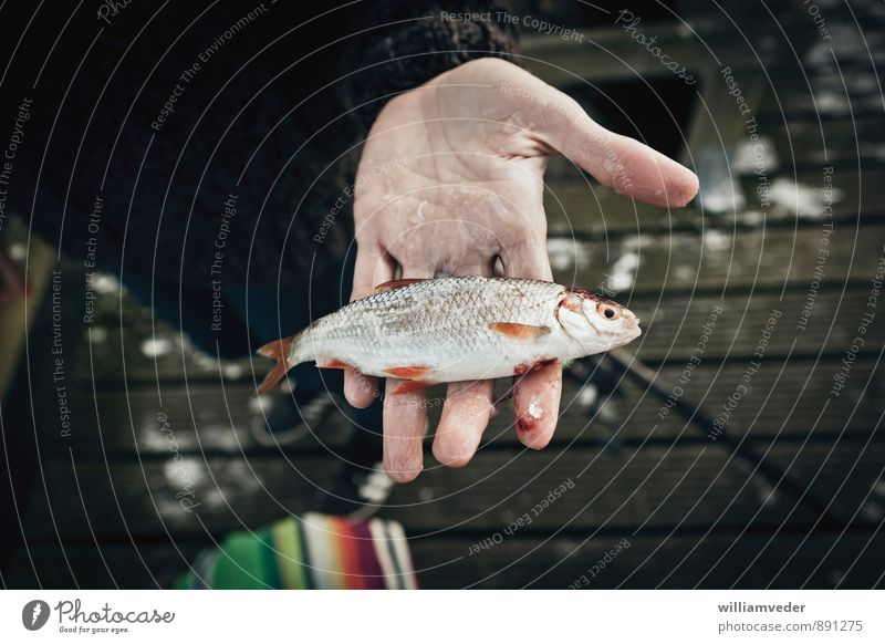 rudd in the hand Fish Meditation Leisure and hobbies Fishing (Angle) Vacation & Travel Tourism Adventure Camping Summer vacation Nature Animal 1 Success Life
