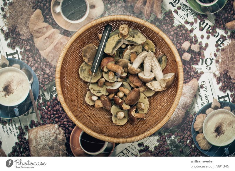 Nature Vacation & Travel Plant Yellow Natural Freedom Brown Leisure and hobbies Wild Gold Trip Nutrition Adventure Mushroom Sustainability Mushroom picker