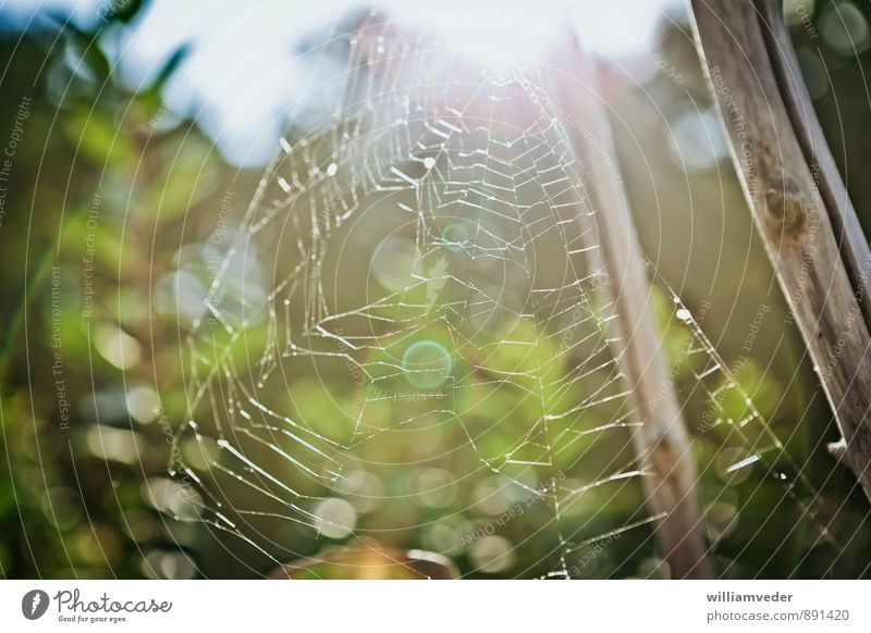 Spider's web against the light Environment Nature Plant Summer Forest Dream Hiking Yellow Gold Green White Wisdom Senior citizen Past Feminine Colour photo