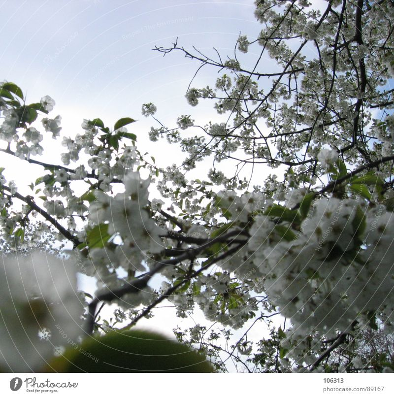 Nature Beautiful Sky White Tree Sun Flower Green Plant Leaf Clouds Relaxation Blossom Spring Garden Park