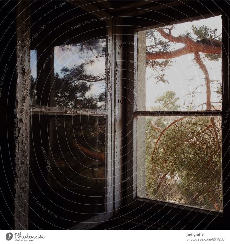Nature Tree House (Residential Structure) Dark Window Natural Exceptional Moody Glass Vantage point Transience Change Mysterious Past Decline Ruin