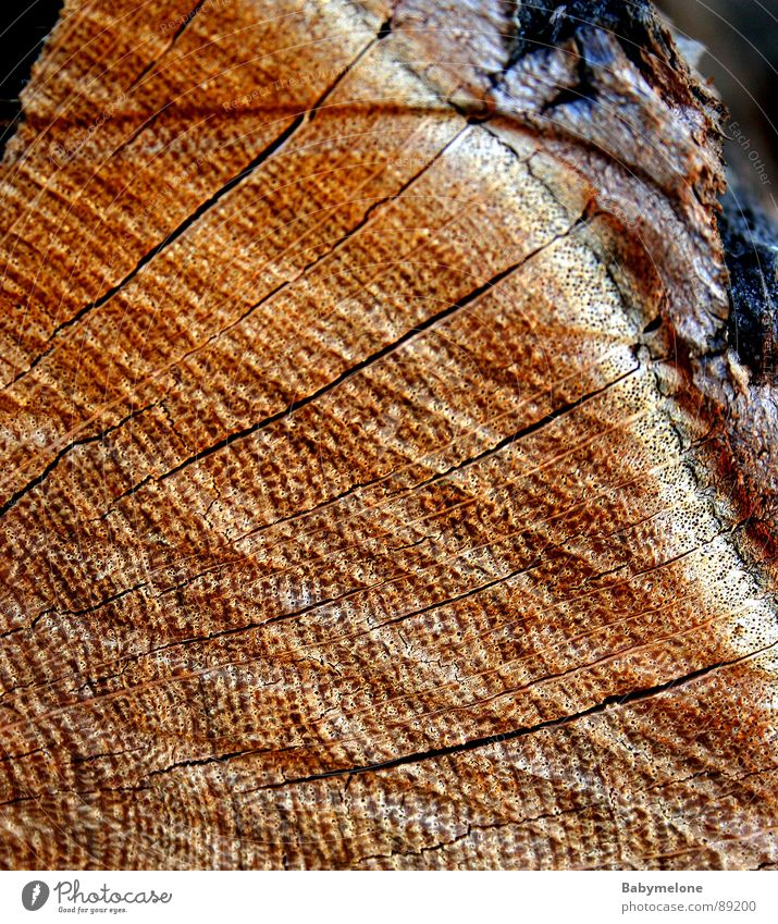 pure nature Wood Tree Pattern Tree bark Tree trunk Brown Nature Line