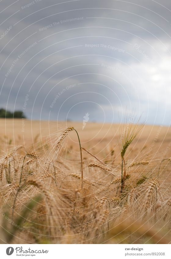 Nature Plant Summer Landscape Clouds Environment Autumn Grass Natural Gray Brown Horizon Weather Field Gold To enjoy