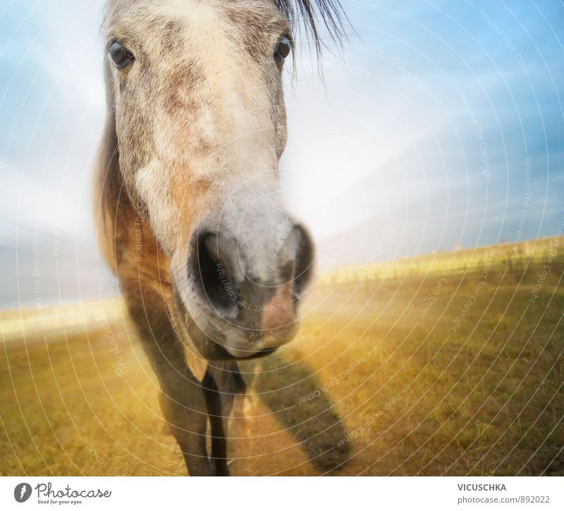 funny horse on autumn field background with blue sky Lifestyle Design Leisure and hobbies Ride Vacation & Travel Adventure Freedom Summer Sun Nature Landscape