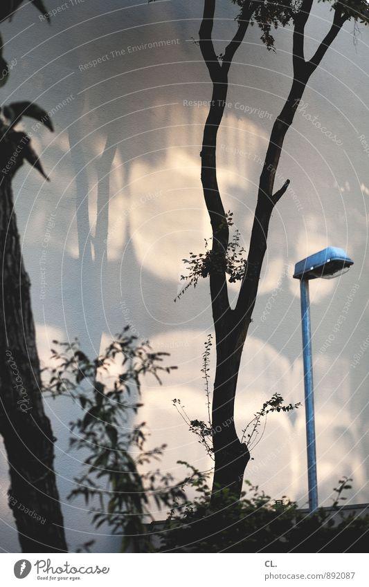 Nature Tree Environment Bushes Esthetic Beautiful weather Street lighting Lamp post