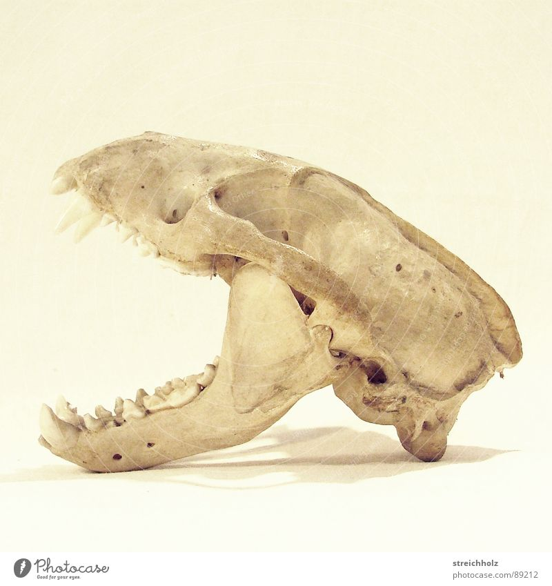 Nature Animal Life Death Grief Past Mammal Difference Hard Animal skull Wilderness Law of nature