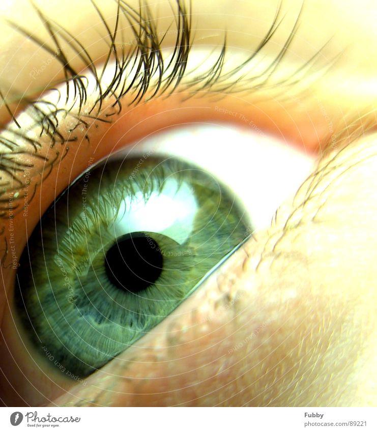 Human being Beautiful Green Face Eyes Appearance Eyelash Pupil