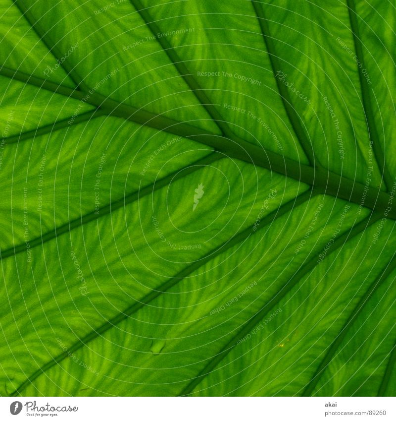 Nature Green Plant Environment Spring Garden Park Bushes Virgin forest Botany South America Wilderness Verdant Creeper Part of the plant