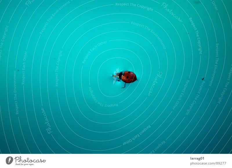 Insect in the pool Ladybird Turquoise Point Landing Strip Disaster Drown Crash landing Good luck charm Swimming pool Bow Structures and shapes Surface tension