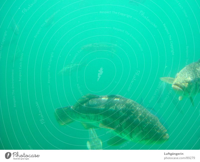 Nature Water Ocean Green Fish Aquarium Submarine