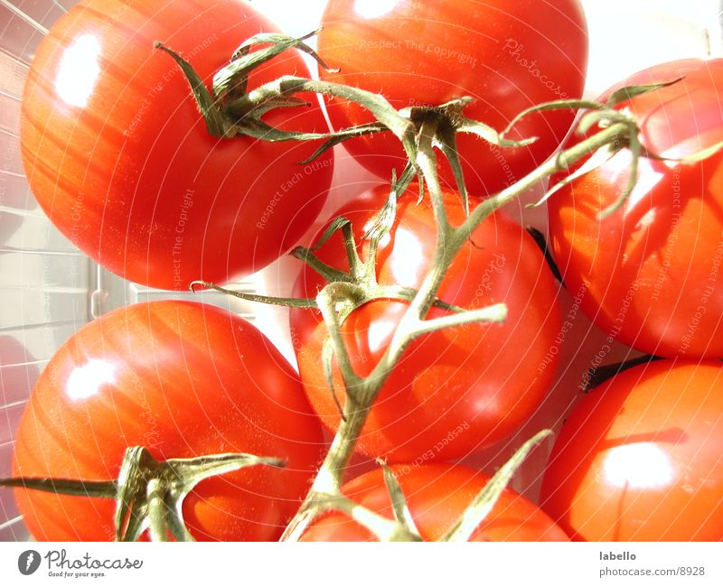 shining tomatoes Solanaceae Kitchen Healthy Tomato with branches Bush tomato bright light Beautiful weather