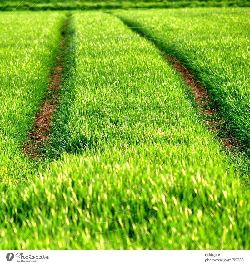 It's so green! Green Expel Horizon Grass Sowing Field Spring Plantlet Juicy kick Furrow Lanes & trails Ground Line parallel Grain young vegetables