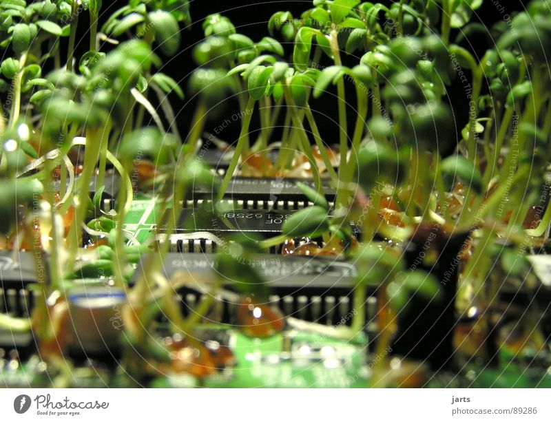 Nature Green Plant Computer Information Technology Success Industry Growth Science & Research Ecological Organic produce Moral Circuit board Electronics